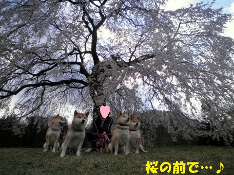 桜の前で・・・!