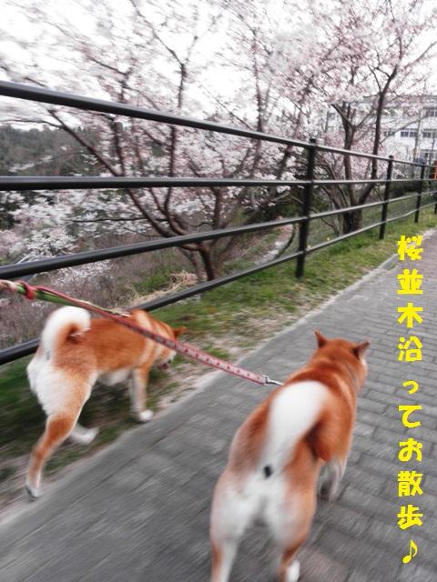 並木道をお散歩