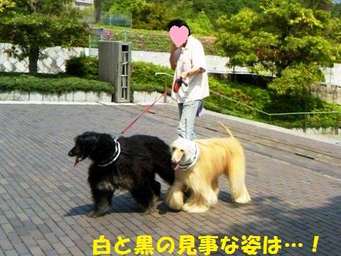 フラウちゃん&ル―エちゃん