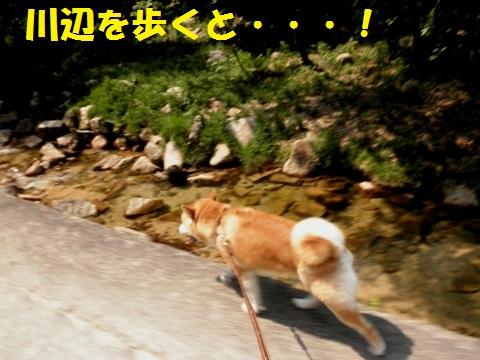 川辺を歩いて