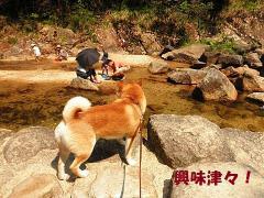 珀ちゃんは水遊びに興味を示す!