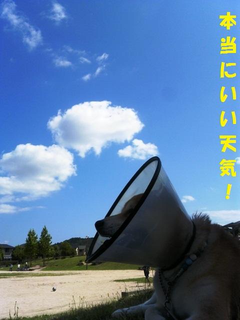 いいお天気だね~!