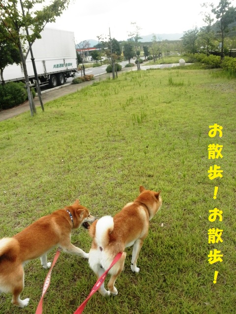お散歩!お散歩!