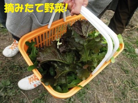 摘みたて野菜