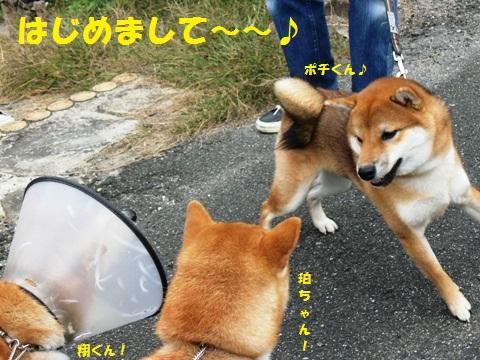 ポチくん!