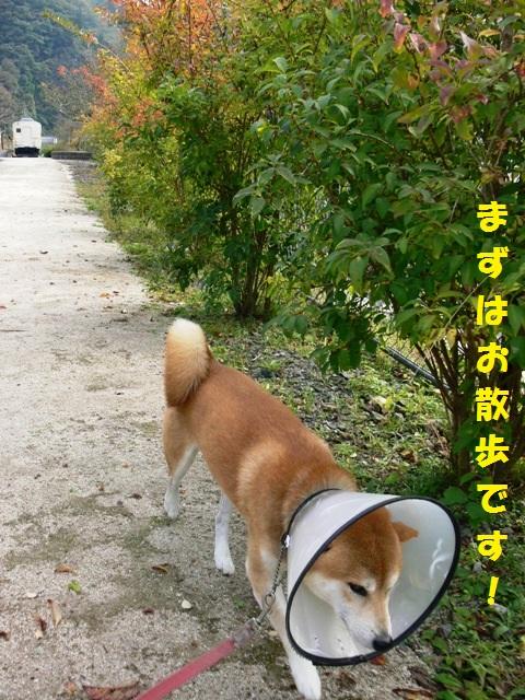 まずはお散歩!!
