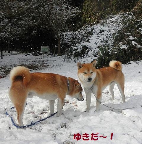 雪-001