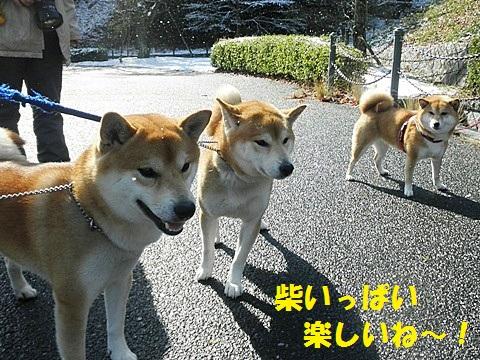 三匹-001