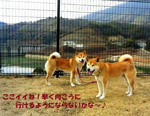 お散歩!!