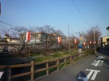 桜祭り 003