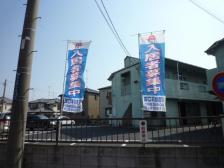 桜・旗 001