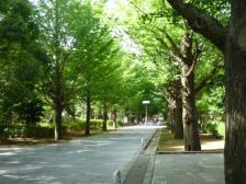 夏の雲公園入口