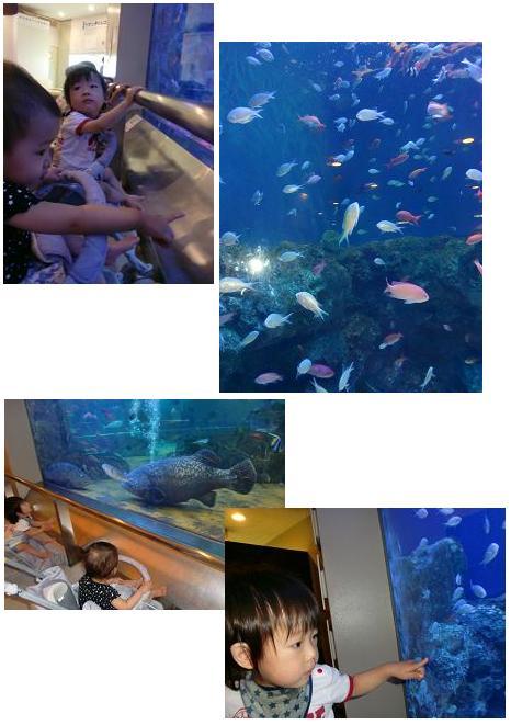 盆 水族館