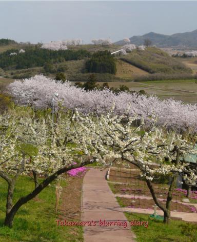 太田市 八王子農園から眺める風景(4月11日)