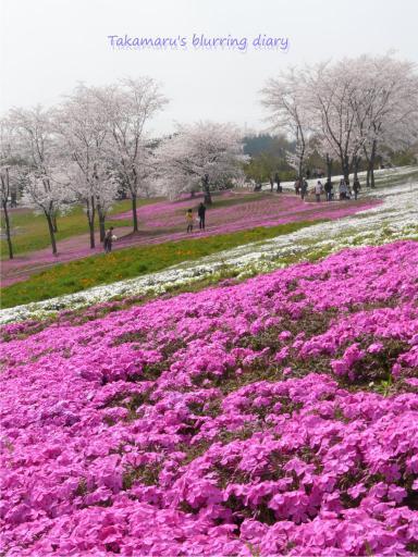 太田北部運動公園(4月10日)