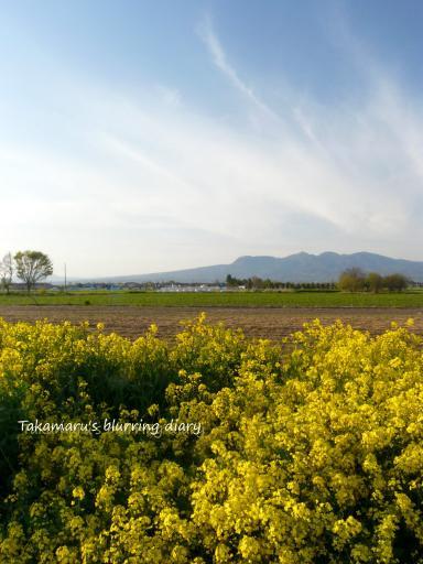 菜の花と空と赤城山