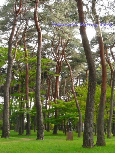この松林、江戸時代に防風林として植林されたとか・・