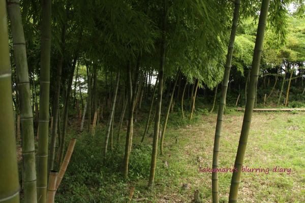 京都にも行ってみたい、出来れば紅葉の・・