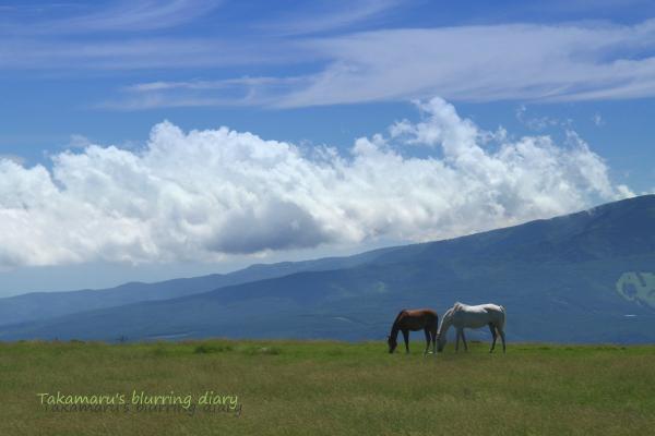 白馬が妙に似合いすぎる場所・・・でした。
