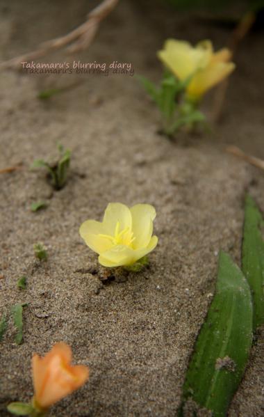 どこかのアニメにあった、砂漠に咲く花みたく・・・