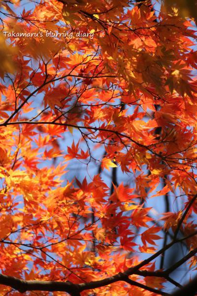 も少し広い景色で紅葉を狙いたい