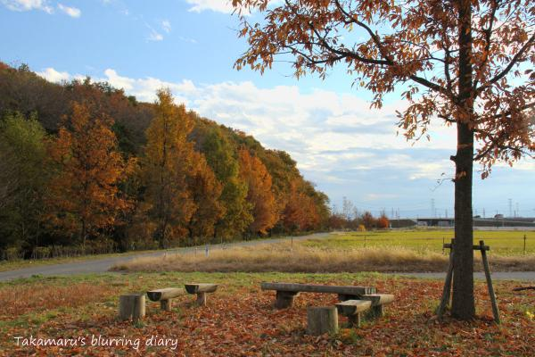 写真はまだ当分の間、秋です
