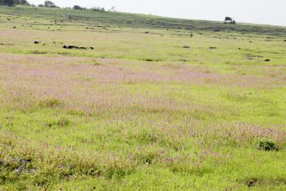 kaasplateau-india14-09-2800144.jpg