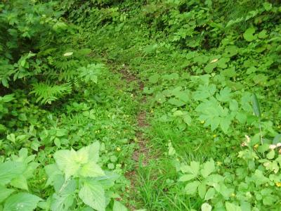 野池へと至る小道