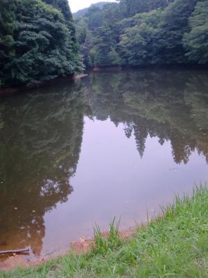 近くの野池