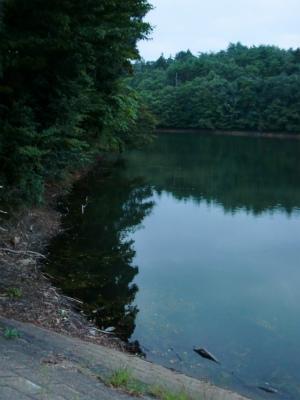 某池その4