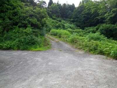 薬師堂へと至る林道