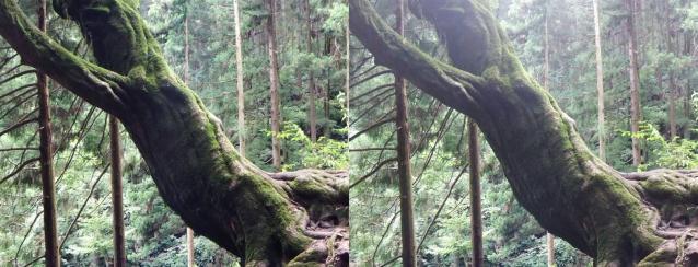stereo 奇っ怪な木