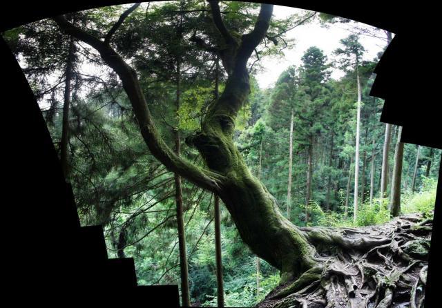 奇っ怪な木