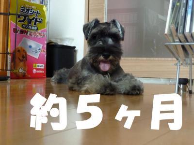 131_convert_20110518094913.jpg