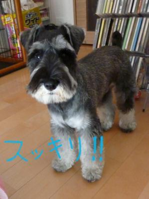 177+-+繧ウ繝斐・_convert_20110429113156