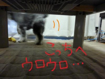 5_12+004_convert_20110512101042.jpg