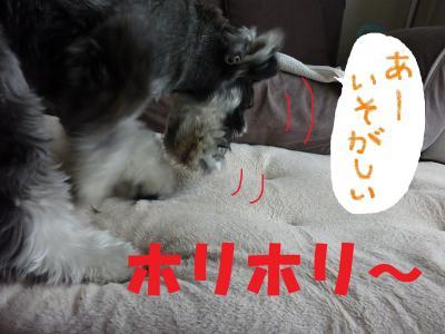 5_19+014_convert_20110519095635.jpg