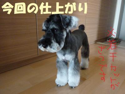 5_21+017_convert_20110521094206.jpg