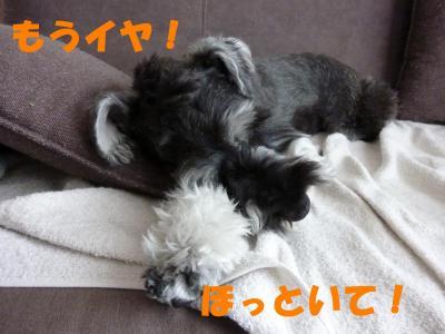 5_5+016_convert_20110505150306.jpg