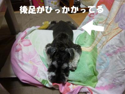 6_11+013_convert_20110614122014.jpg