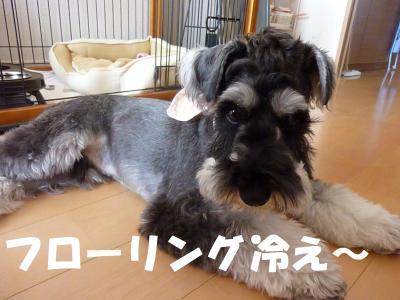 6_22+011_convert_20110622091634.jpg
