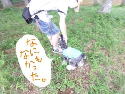 6_6+081_convert_20110608091121.jpg
