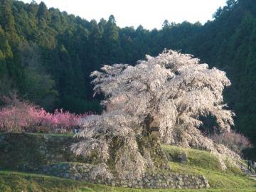 2010花見 065