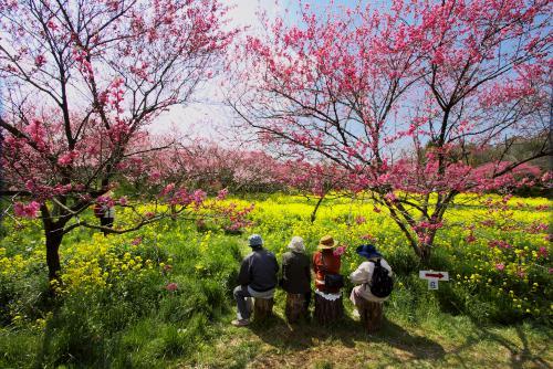 菊桃の丘ー8