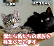 マオ&クロミちゃん募集バナー
