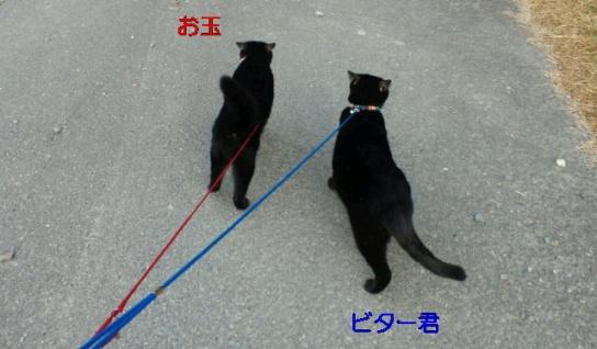お散歩する二人3242