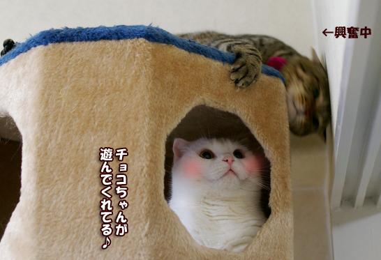 チョコちゃんが遊んでくれてる!!!!!のコピー