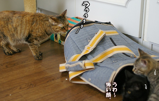 なんとキララが猫部屋にまでやってきたよコピー