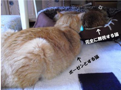 ボーゼンとする猫