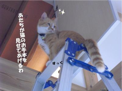 猫のお手本をお見せします!